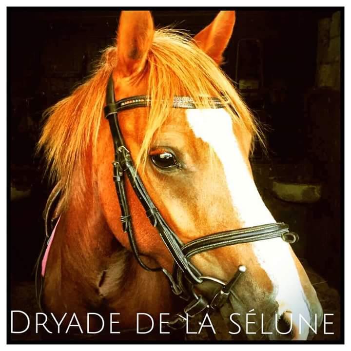 Dryade De La Sélune